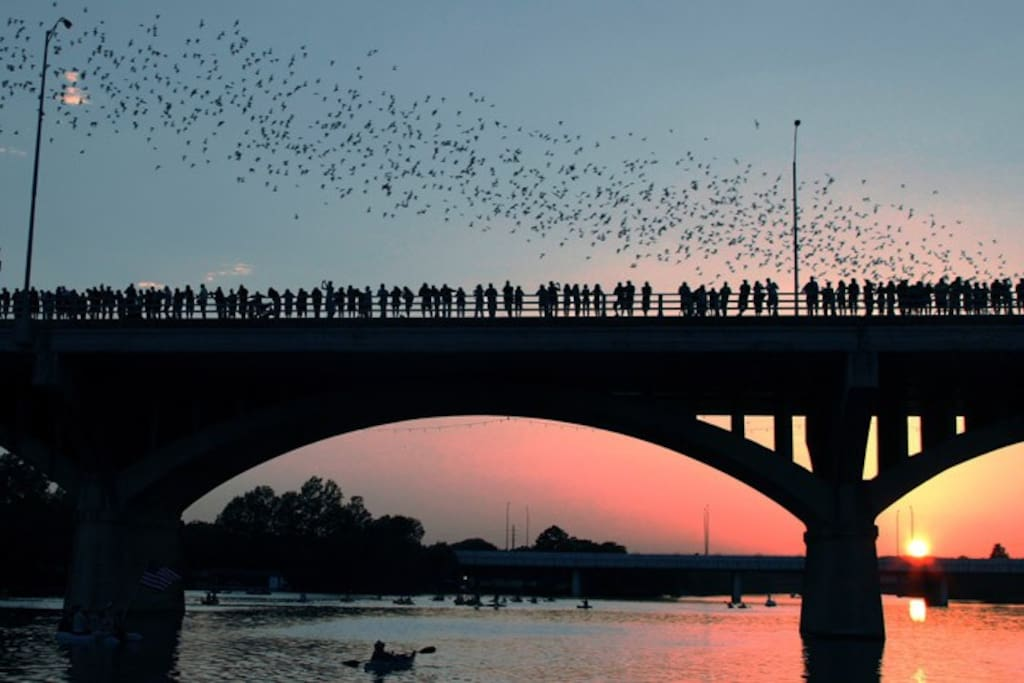 The scenic Congress Bridge (where the bats fly out at night) is also less than a 5-minute walk away.