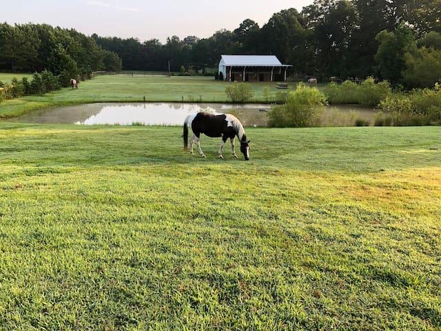 Peaceful location overlooking horse farm