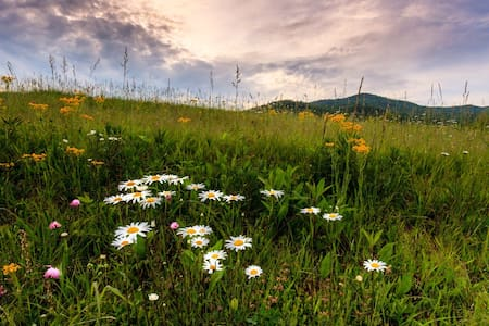 SPRINGTIME ESCAPE*native wildflowers*scenic drives - Maggie Valley - House