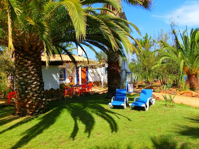 Casa Palmeira - S.Teotónio
