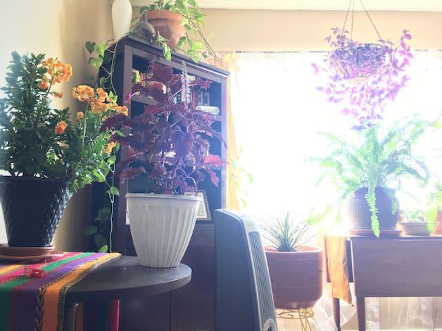 Comfy homey garden oasis - Los Angeles - Lägenhet