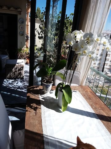 Casa delle orchidee