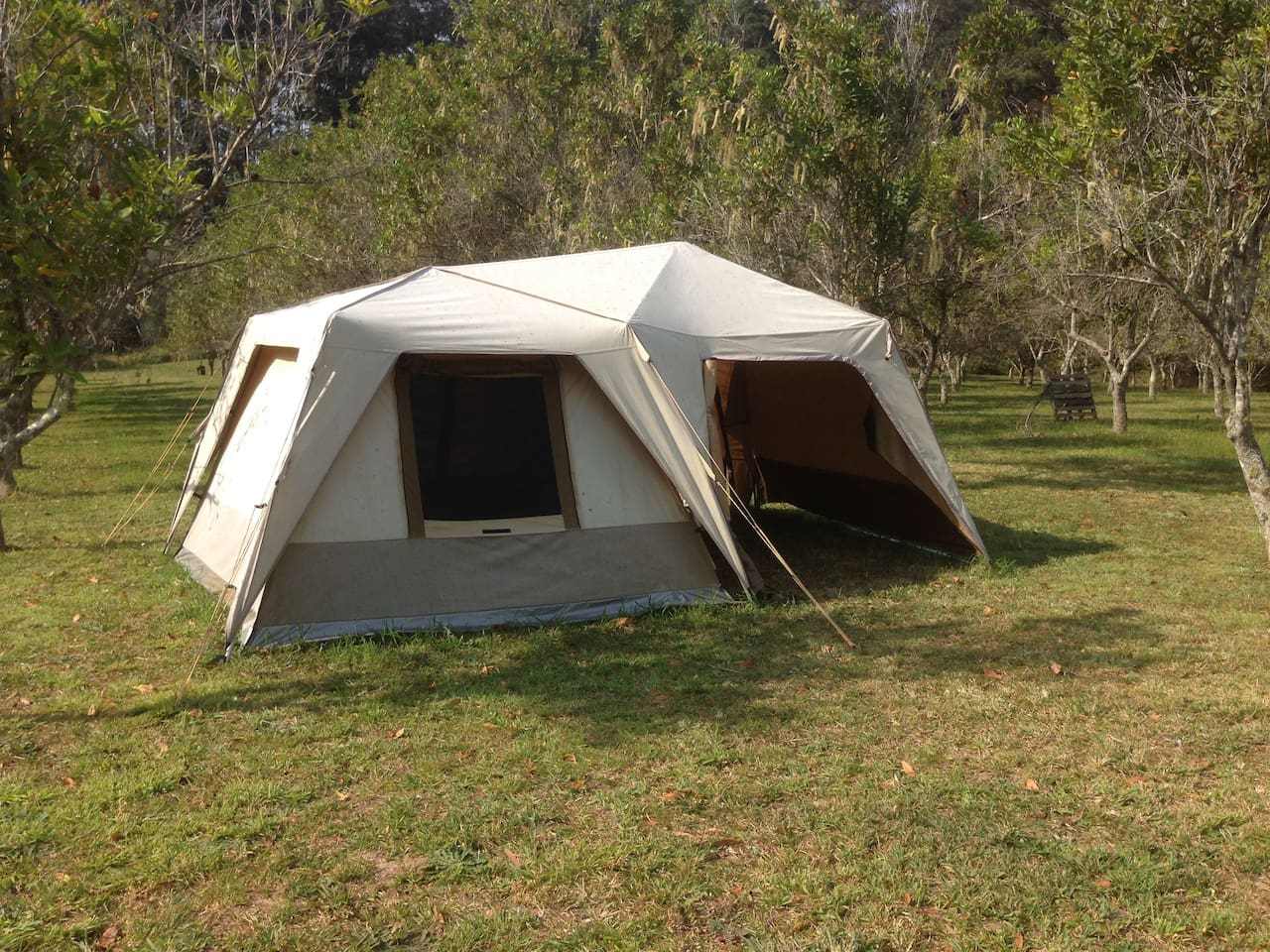 The tent is located between the rows of Macadamias