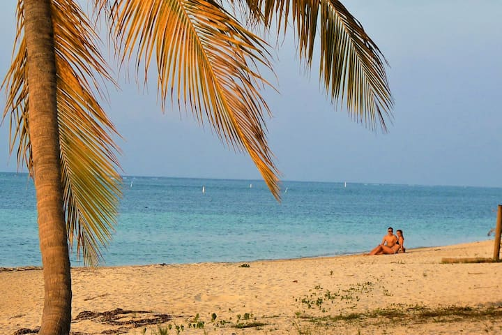 Beachfront Seadancer #6