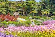 The Australian Botanical Gardens.