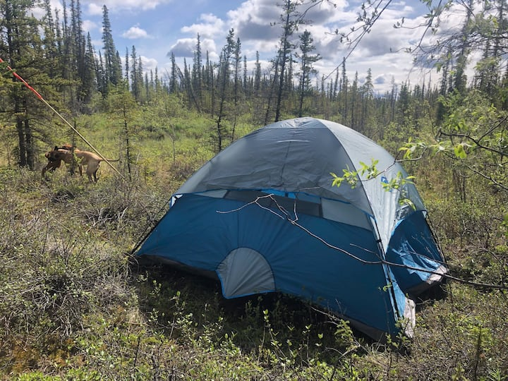 Little Blue Tent In The Last Frontier