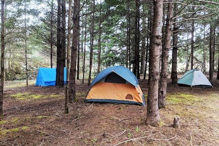 Quiet camping at Oasis in Nature