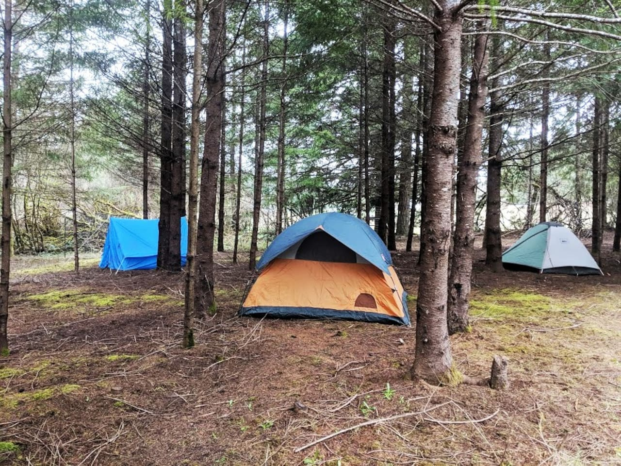 Pitch your tent under the trees or in the pasture  enjoy nature  in one of our three campsites