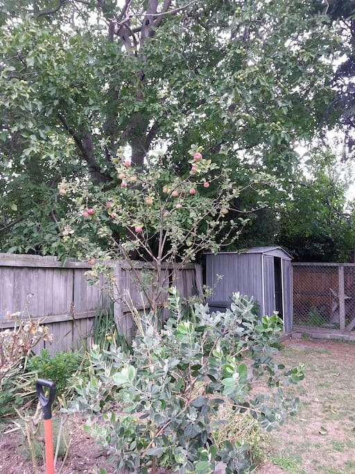 Fruit trees, herbs, flowers, garden relaxation after your busy travels.