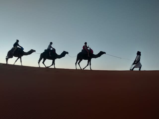 Camel tour at sunset time