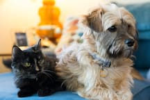 We have both cats and dogs. They are friendly and love attention. We work hard to keep our house clean but do not recommend it for those that are allergic.