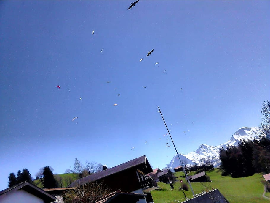Para-gliders passing above your head all day