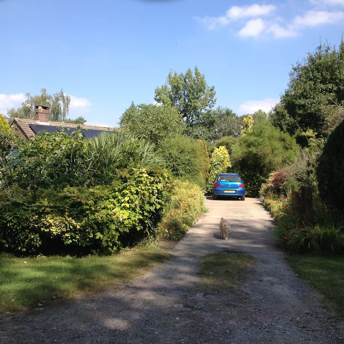 Our driveway and large garden