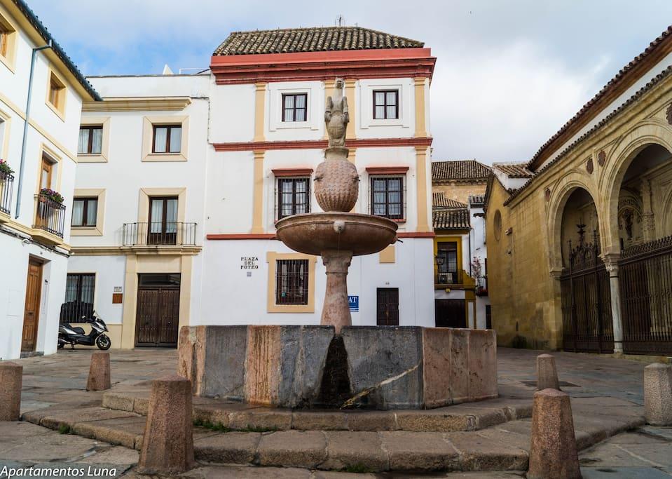 Plaza del Potro (Entorno de la Vivienda)
