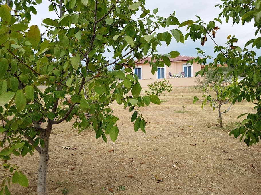 private garden with olive trees, vineyards and fruit trees!