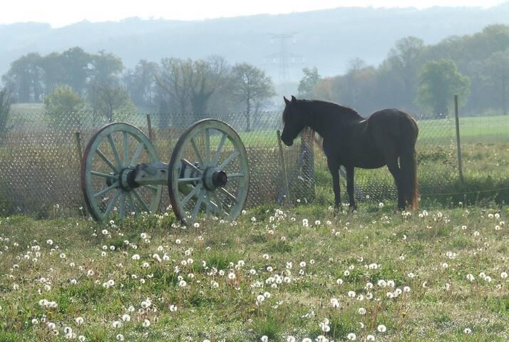 Nikki the horse in adjoining paddock
