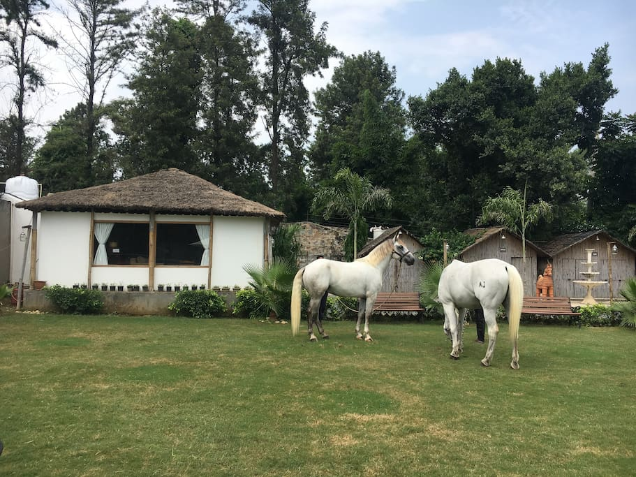 Live close to nature and try your hands at horseback riding