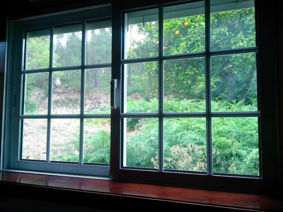 Vista pela janela para o quintal