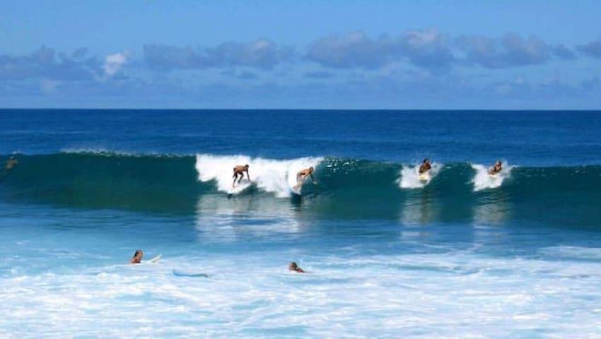 Surfer's Paradise #3A - Haleiwa - Hus