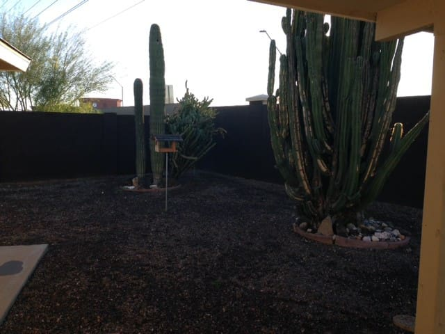 Enjoy the large backyard with cactus and beautiful sunrise views!