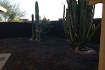 Enjoy the large backyard with cactus and beautiful sunrise views!