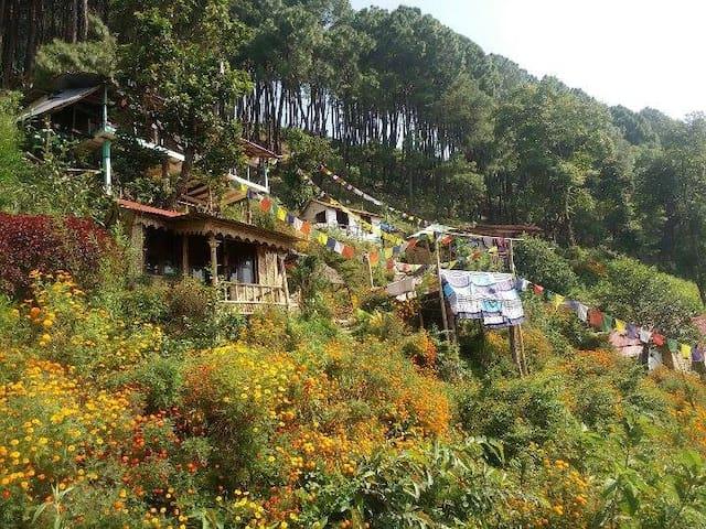 Dreamland Eco Hostel