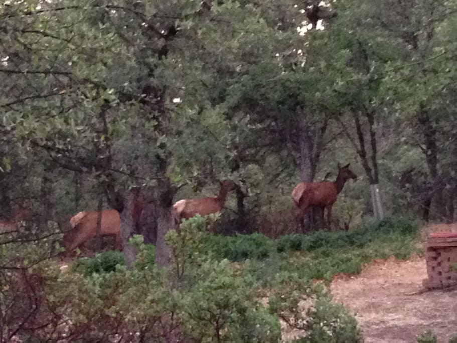 Elk & deer walk the property almost daily