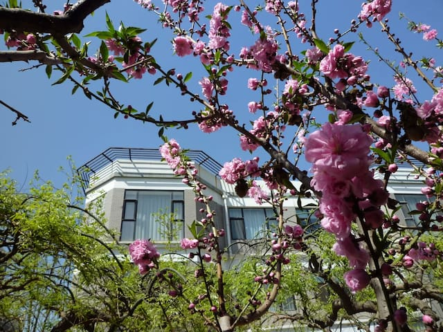 城市间花园别墅一栋洋房 (大床房) - Beijing - Villa