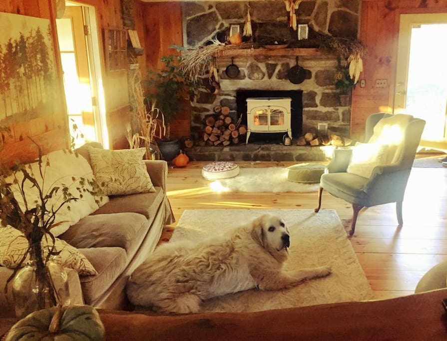 The living room- dog not included!
