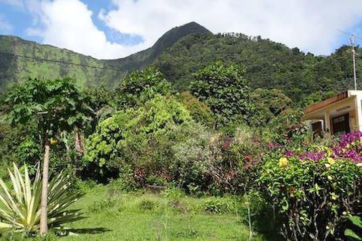 chambre en pleine verdure tropicale 3