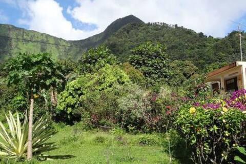 Chambre en pleine verdure tropicale 2