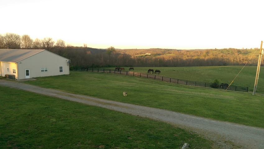 Friesian Horse Farm Bordering The Kentucky River - Harrodsburg - House