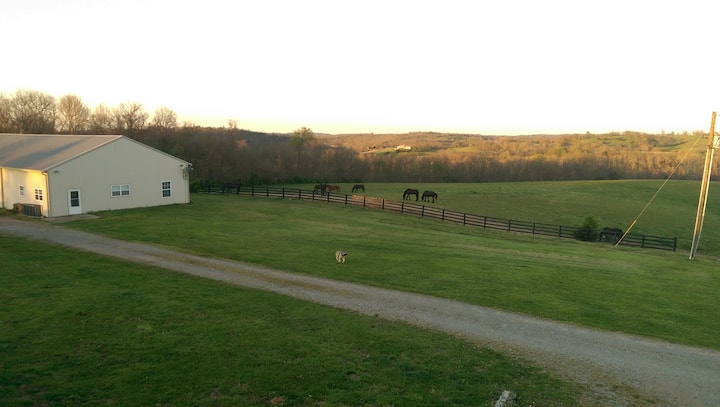Friesian Horse Farm Bordering The Kentucky River