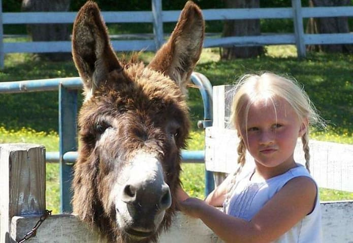 Love animals, love horses?Camp at our Barn!