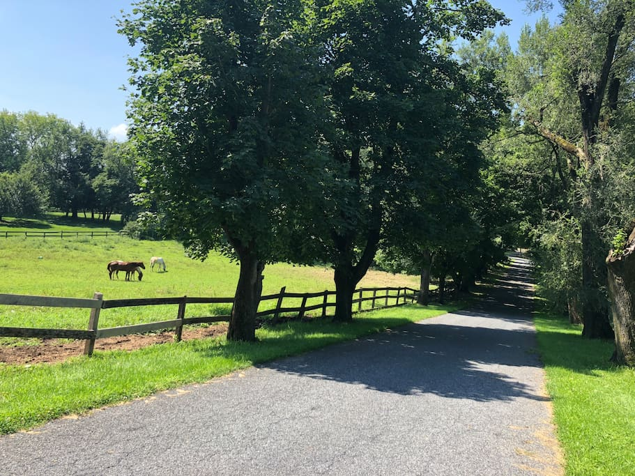 Quarter mile tree-lined driveway where the horses are there to greet you!