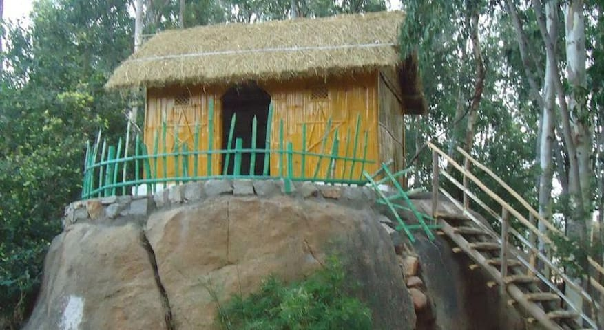 Golden Oriole Hut