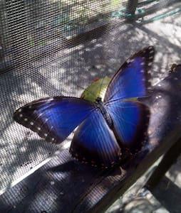 Butterfly EcoPark