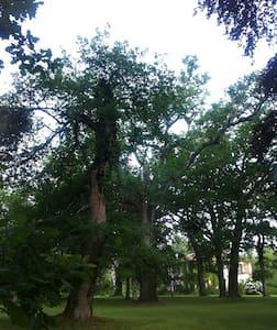 Vieux manoir au coeur de la forêt - Ousse-Suzan