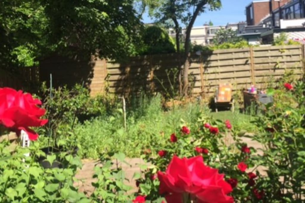 Our lovely big nature garden in the middle of the city!