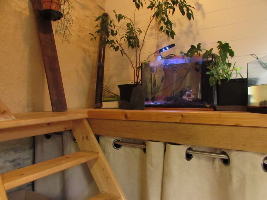 ambiance relaxante avec aquarium et plantes
