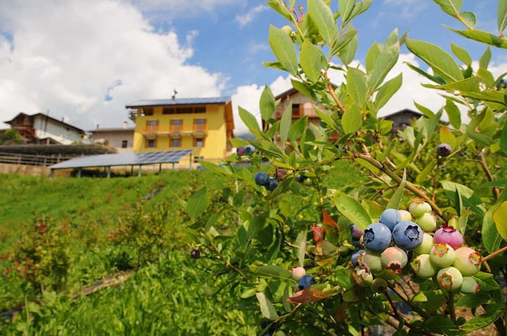 B&B Tomaselli - Strigno - Bed & Breakfast
