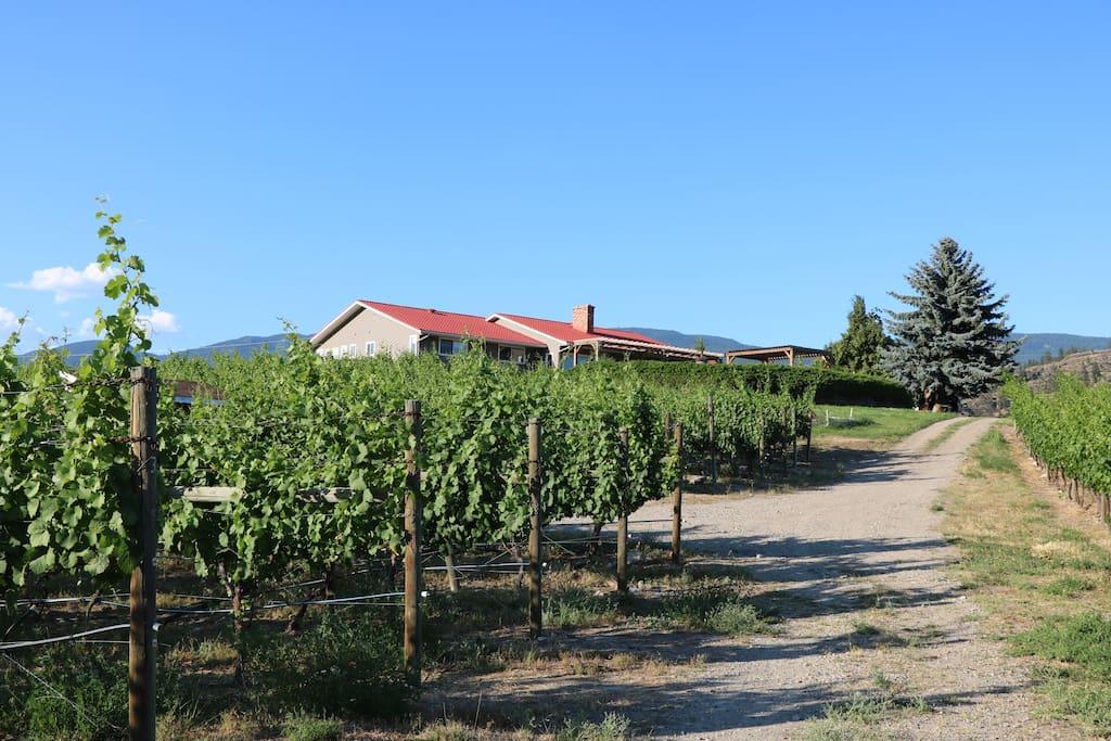 Vineyard Property