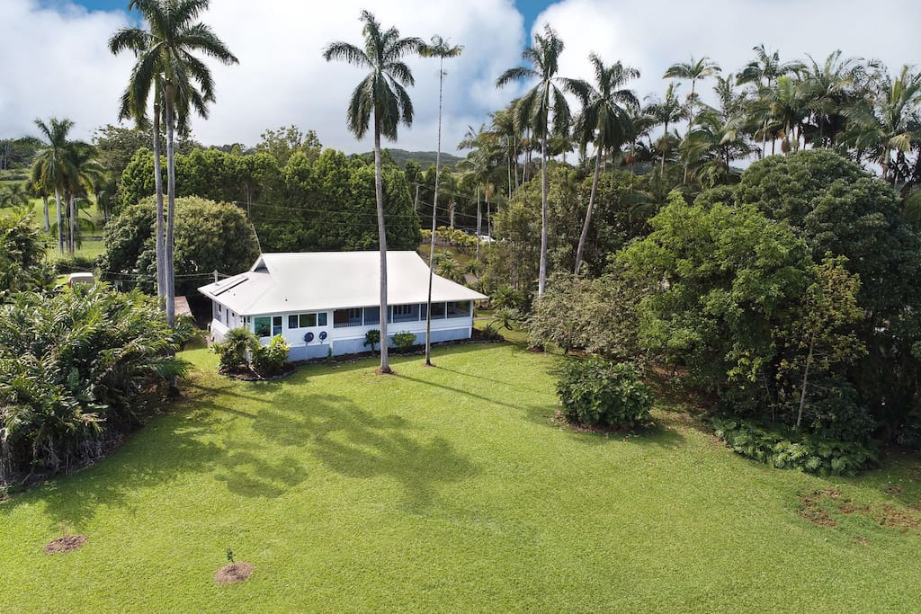 My Hilo Home sits on a very large lot so you can run around on the front lawn!