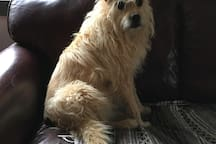 Our friendly dog Finn