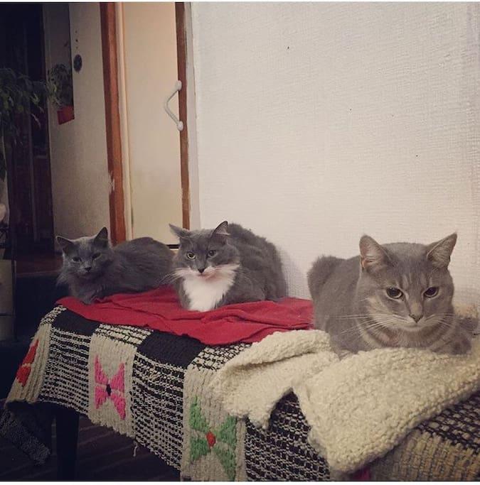 3 de los 5 gatos que nos acompañan