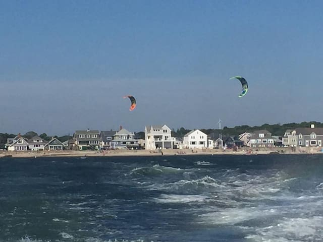 CAPE COD BEACH LIFE at NEW SILVER BEACH!