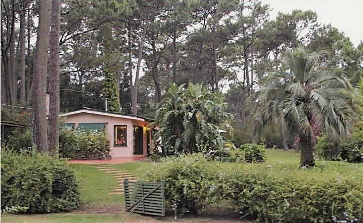 Cálido Monoambiente, bosque y mar - Punta Ballena.