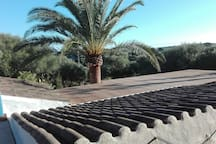 Roof view on landing at arrival with 35 year old palm tree...