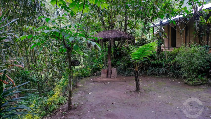 Lonely Planet Homestay - Into The Nature