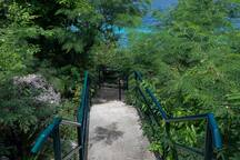 Access to the marine sanctuary. Below the steps!